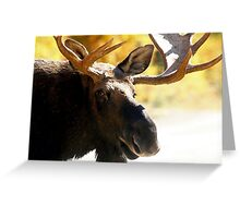 Bull Maine Moose Greeting Card