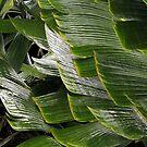 Shapes of Hawai'i - 5 by Ellen Cotton