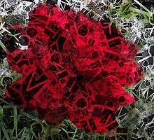 Red Rose Edges Letters 2 by Christopher Johnson