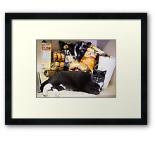 Fat Cat Protects His Food Framed Print