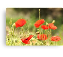 Provence Poppies Canvas Print