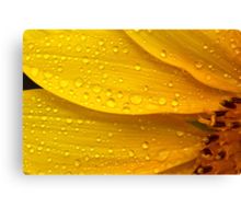 Flower - It's sunny but raining Canvas Print