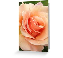 Peach Rose Greeting Card