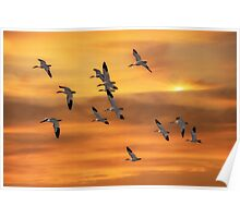 SNOW GEESE OF AUTUMN Poster