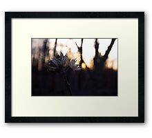 In the Warmth of the Sun Framed Print