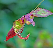 Bramble Leaves by MotherNature