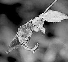 Bramble Leaves - Black and White by MotherNature2