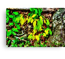 Autumn Leaves In Green And Yellow Canvas Print