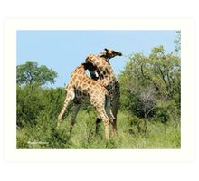 THE SPELL - GIRAFFE - Giraffa camelopardalis - ENCOUNTERS IN MATING SEASON Art Print