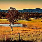 From a Distance by wallarooimages
