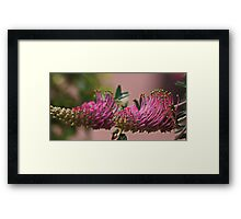 The Measure Of Life .... Framed Print