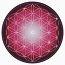Starburst Pink Flower of Life by haymelter