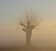 Willow Tree by Kasia Nowak