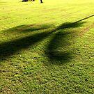Tree Shadows by John Dalkin