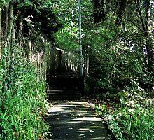 Walking Back Home....... by lynn carter