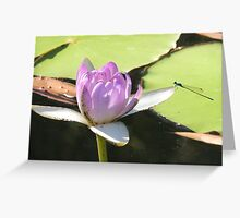 Blue Dragonfly on Lilac Waterlilly Greeting Card