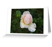 Delicate lace Greeting Card