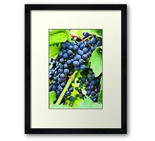 Winery Vineyard Framed Print