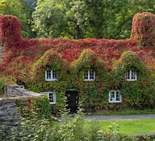 Ivy Cottage by Adrian Evans