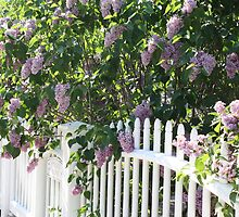 Lilac Entrance by AngelaBishop
