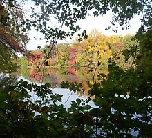 Peek through the green to the red and yellow by nealbarnett
