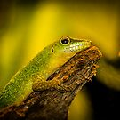 Reptile by FelipeLodi