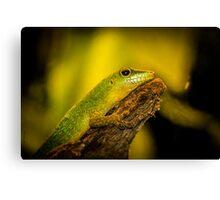 Reptile Canvas Print