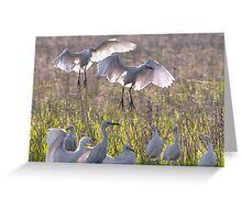 Egrets  8 Greeting Card