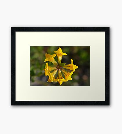 Natures Kaleidoscope Framed Print