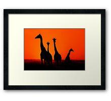 Sunset in Africa Framed Print