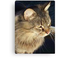 aritocat Canvas Print
