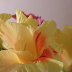 yellow gladiolas with orange centers by ItsAnOddWorld
