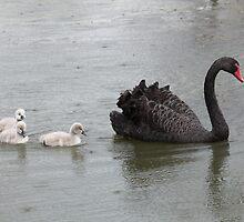 Black Swan and Goslings  by RickLionheart