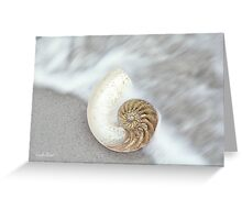 The Nautilus Shell Greeting Card