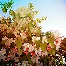 Bloom by amak