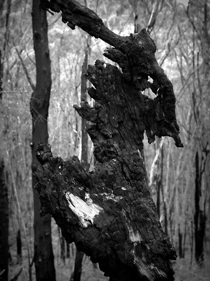Scary Tree- Sir Mark Oliphant Conservation Park by Ben Loveday