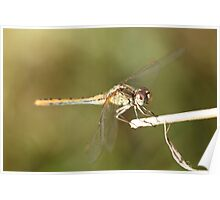 Dragonfly Close Up & Personal  Poster