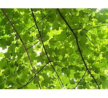 Just Green Photographic Print