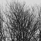 Winter Trees by Alastair Creswell