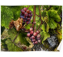 The True Vine  ~ Grapes ~ Poster