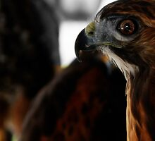 Hawk Eye by ArtbyDigman