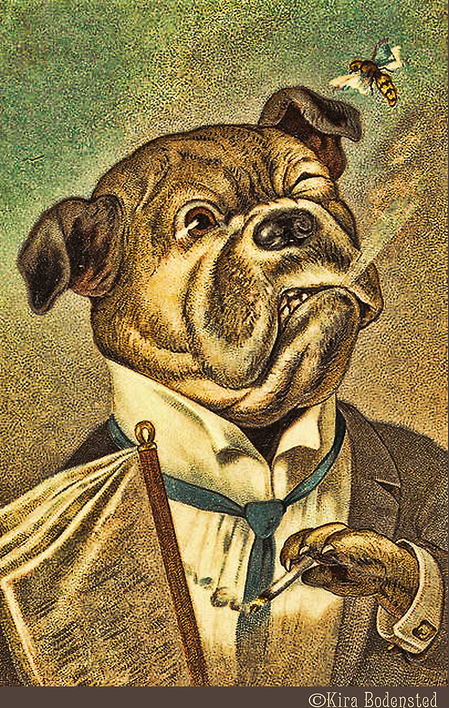 Greeting card - Vintage Dogs 3 by © Kira Bodensted