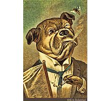 Greeting card - Vintage Dogs 3 Photographic Print