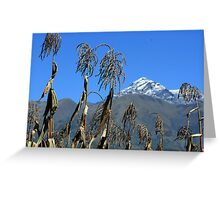 Corn Field with Mount Cotacachi Greeting Card