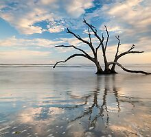 Charleston South Carolina Folly Beach Dead Tree Atlantic Surf by MarkVanDyke