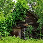 Old Shed in Spring by Daniel Carroll