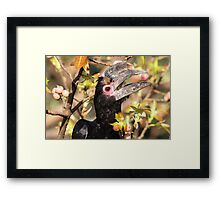 Caught in the act! Framed Print
