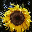 Loving The Sun! by heatherfriedman