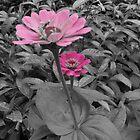 Flowers by Harsha Bhuyan