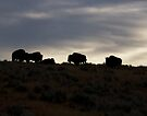 Buffalo Silhouette by pmreed
